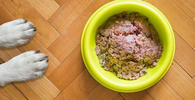 nourriture pour chien